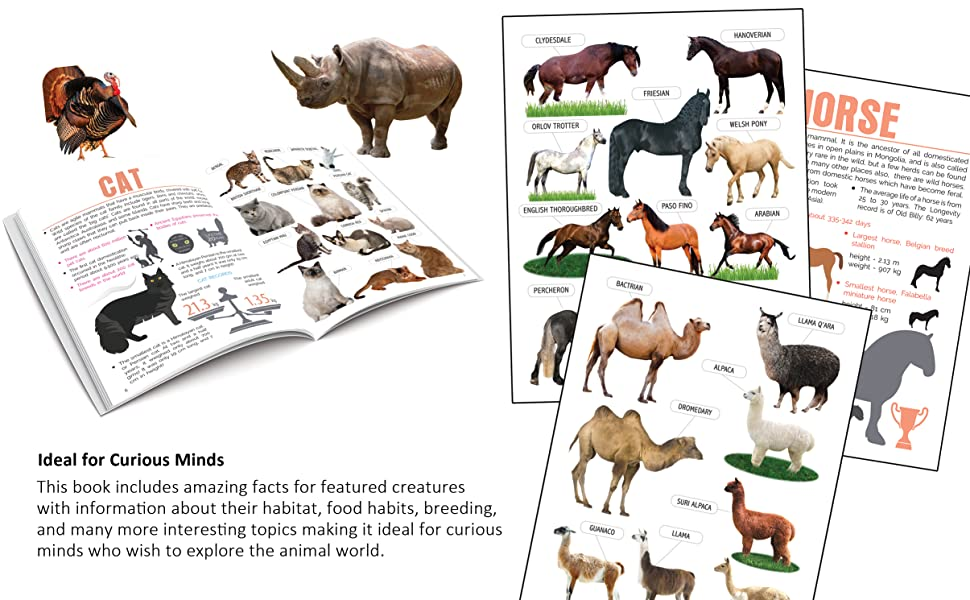 encyclopedia for kids, Minipedia, Reference books, Dreamland Publications